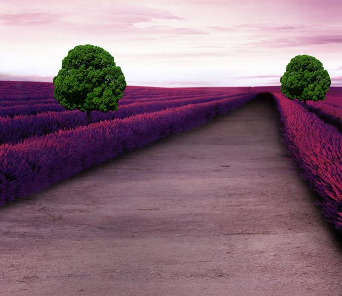 Flowers Field Road 1 Wallpaper AJ Wallpaper