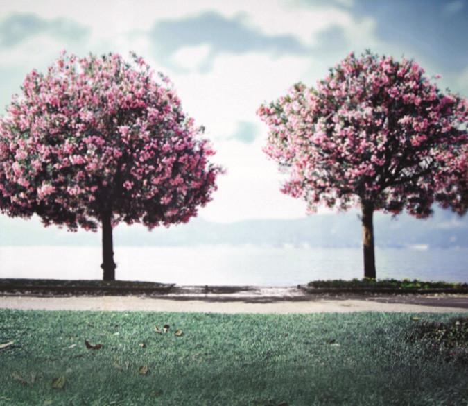 Blooming Trees 7 Wallpaper AJ Wallpaper