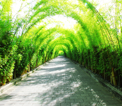 Bamboos Avenue Wallpaper AJ Wallpaper