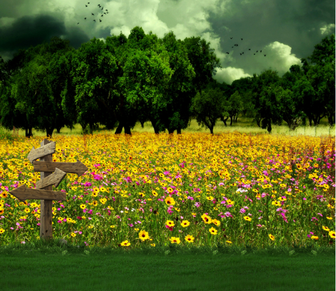 Bright Flowers Field Wallpaper AJ Wallpaper