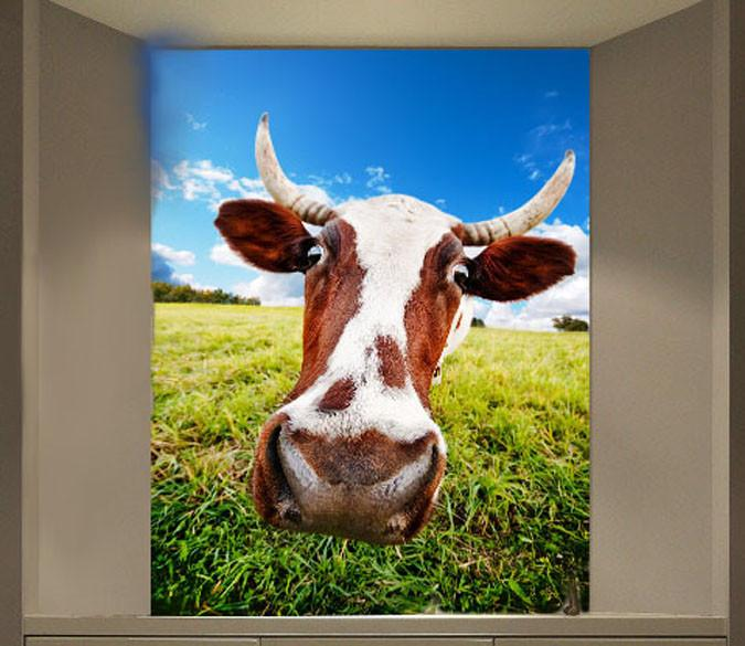 Funny Cattle Wallpaper AJ Wallpaper