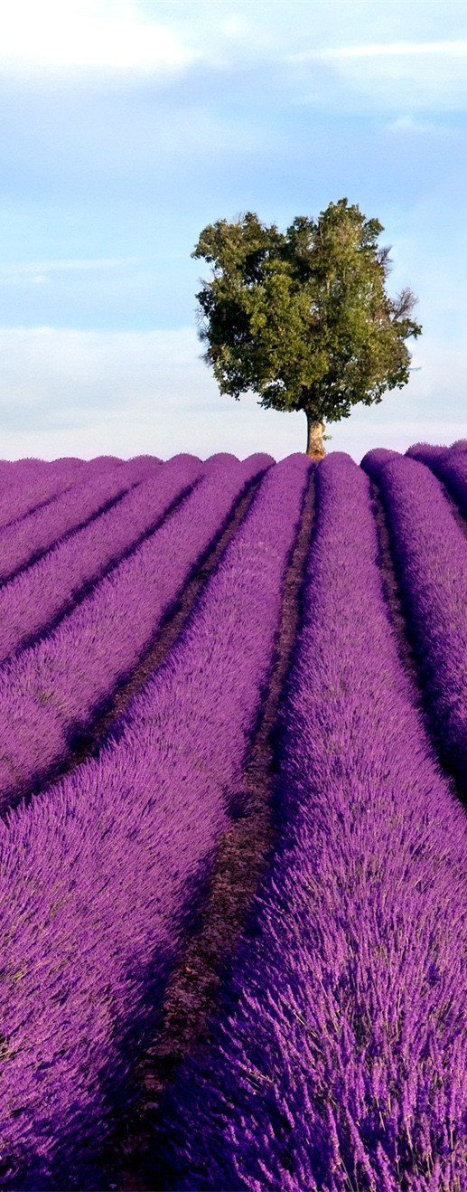 3D lavender field tree door mural Wallpaper AJ Wallpaper