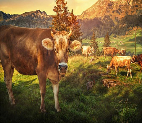 3D Fields Cow Grassland 72 Wallpaper AJ Wallpaper