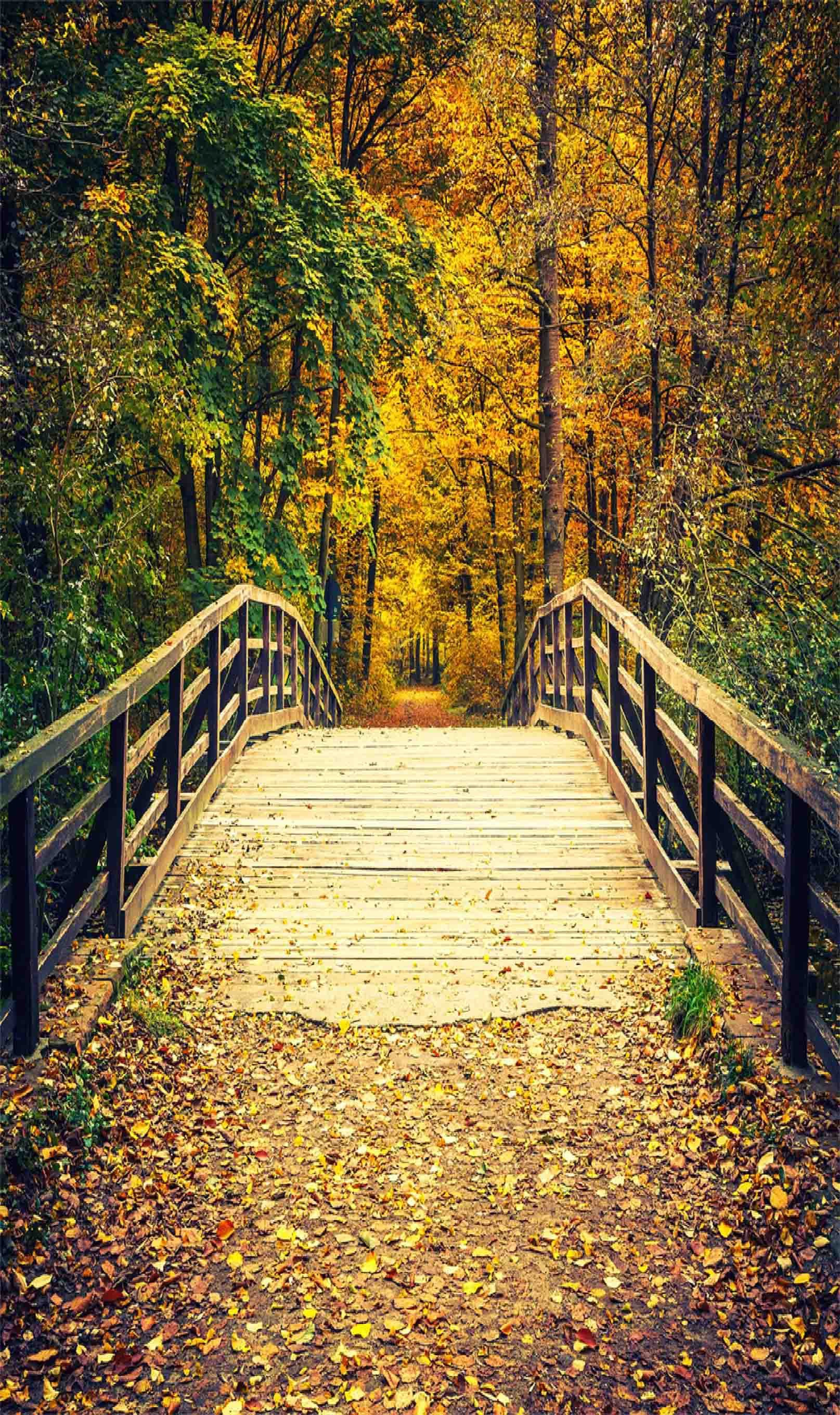 3D Forest Wooden Bridge 779 Stair Risers Wallpaper AJ Wallpaper