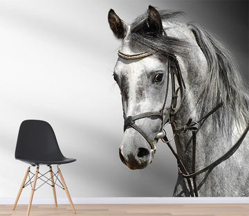 3D Horse Head 062 Wallpaper AJ Wallpaper