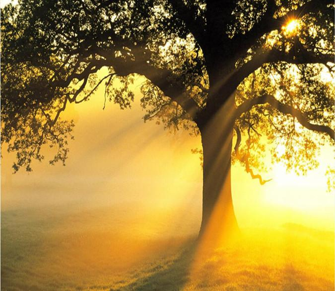 Sunshine Through The Tree 762 Wallpaper AJ Wallpaper 1