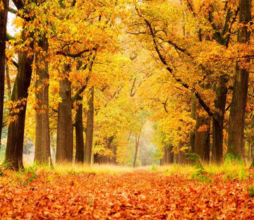 3D Autumn Forest Path 1 Wallpaper AJ Wallpaper