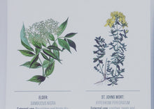 Postcard in english: Yarrow/Elder