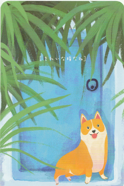 Diary of a Corgi Dog - CD14 - Hide & Seek