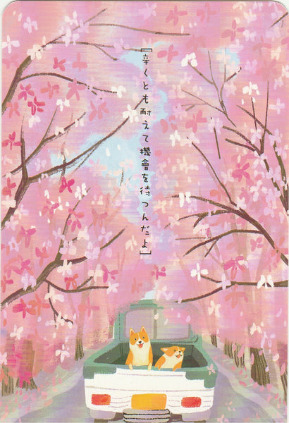 Diary of a Corgi Dog - CD01 - Sakura Street