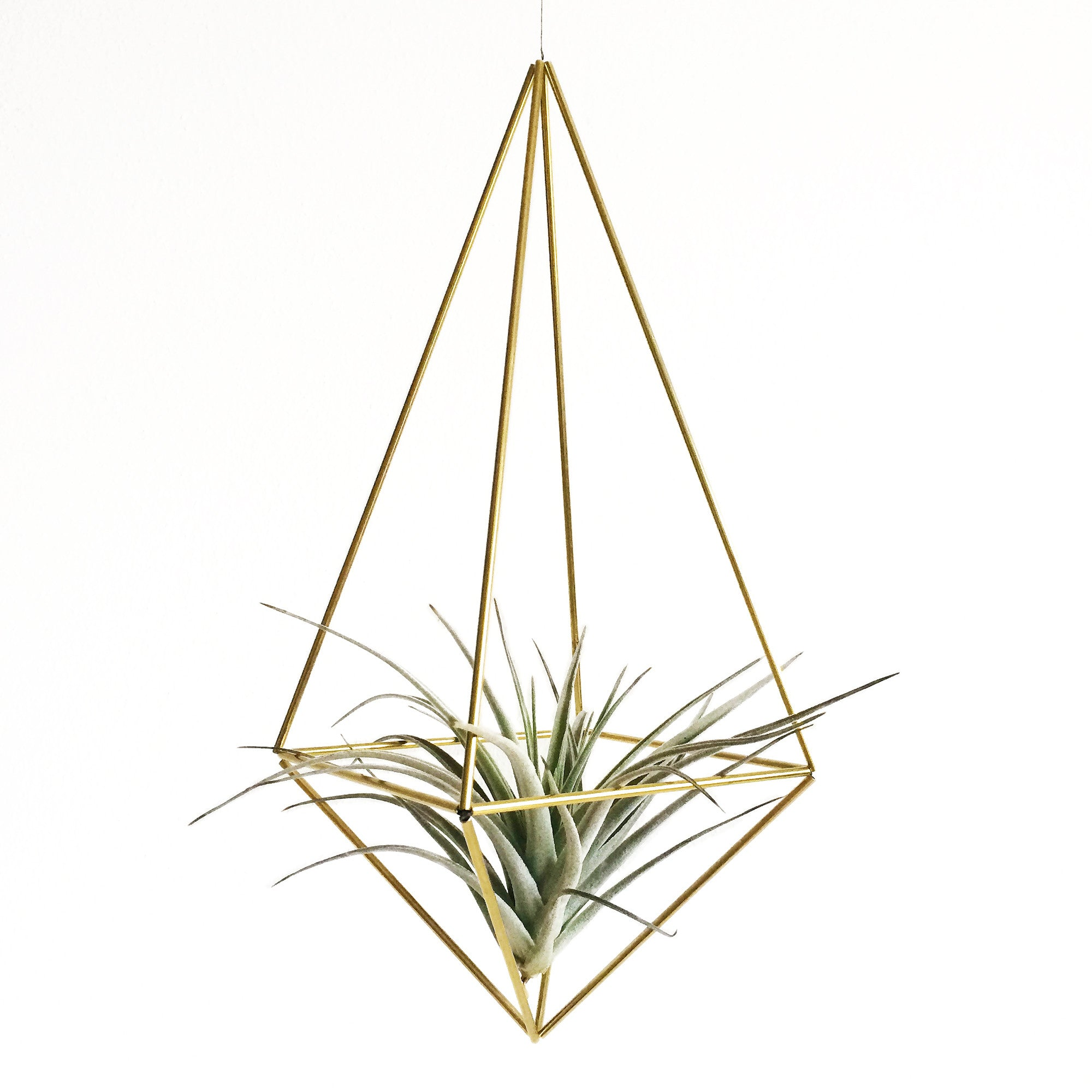DIY Himmelis Drop M & Airplant