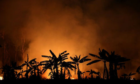 A fire near Porto Velho, Brazil, September 2019. Photograph: Bruno Kelly/Reuters