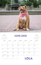 2020 Pit Bull Heroes Wall Calendar (U.S. Shipping Included)