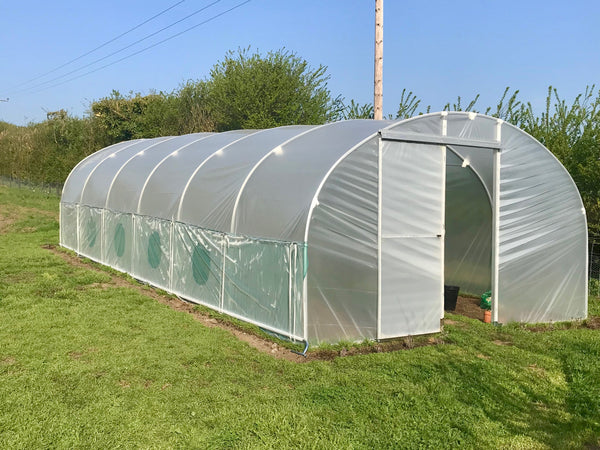 Poly tunnel at Pippettes Farm
