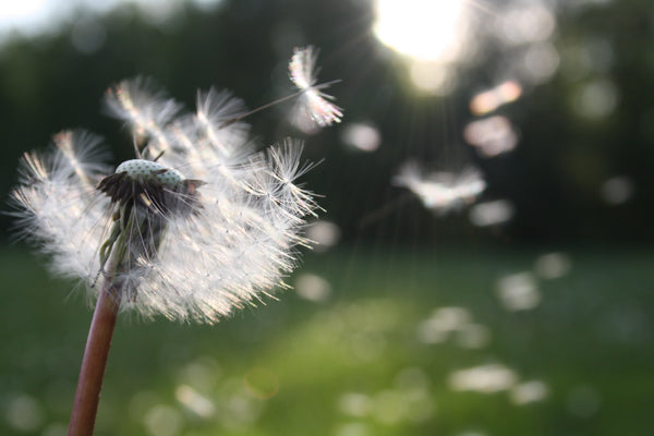 What is hay fever and what natural remedies can I try?