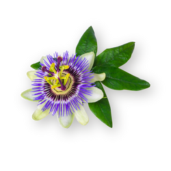 Passionflower - Dried Herb 100g