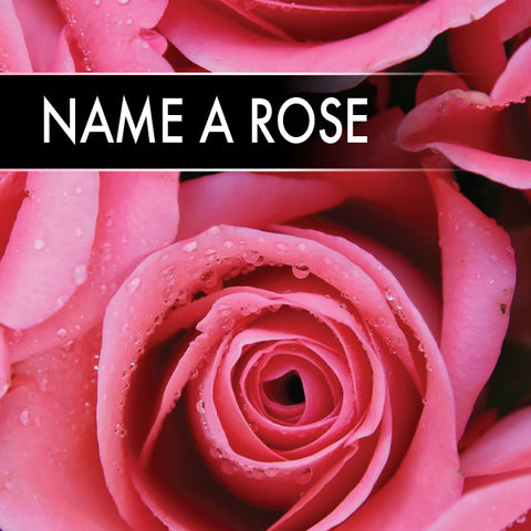 Name a Rose - Budget | ShaneToddGifts.co.uk