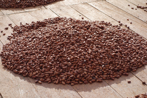 Colombian Cocoa Beans - Amelia Rope Chocolate