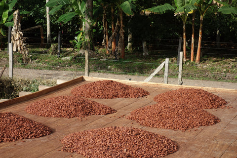 Colombian Cocoa Beans
