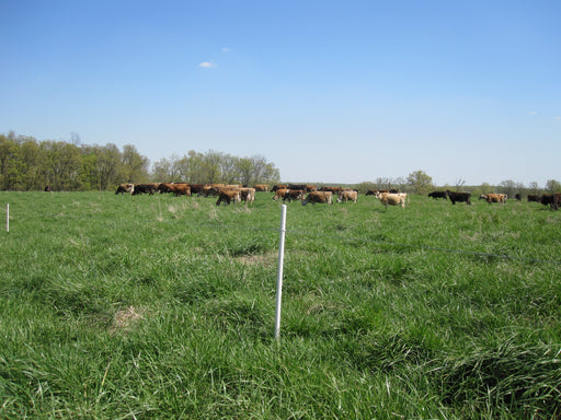 "25 Pack of PasturePro Line Posts 1-1/8"" x 4'"