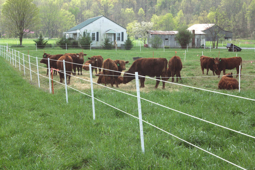 "(Sold Out - 4-6 Week Lead Time)6' Poly T-Posts (1.5"", 1.75"", or 2.125"" Width) 25/Pack"