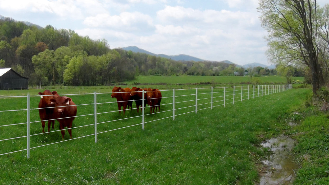 "(Sold Out - 3- Week Lead Time)8' Poly T-Posts (1.75"", or 2.125"" Width) 25/Pack"