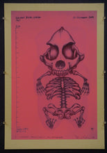 Confections of a Dangerous Mind - Gummy Bear Skeleton Test Prints