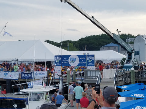Public weigh in of bluefin tuna at the Gloucester Massachusetts Bluefin Blowout 2017 Tournament where Zombait was used to catch bluefin tuna