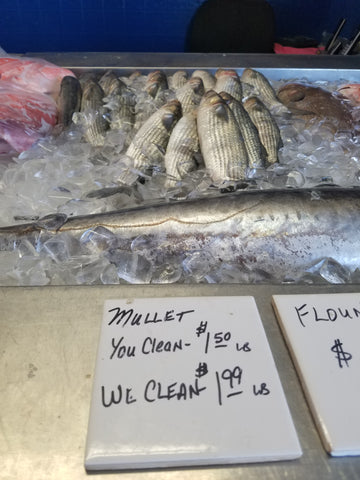 Fresh mullet fish on display in fort walton beach florida mullet can be used as dead bait for tarpon sailfish and grouper fishing