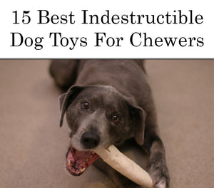 15 Best Indestructible Dog Toys For Power Chewers