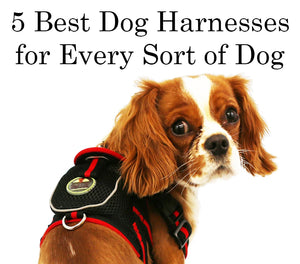 5 Best Dog Harnesses for Every Sort of Dog