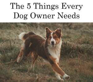 5 Things Every Dog Owner Needs