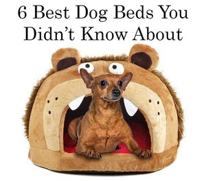 6 Best Dog Beds You Didn't Know About