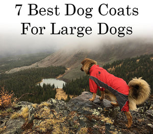 7 Best Dog Coats For Large Dogs