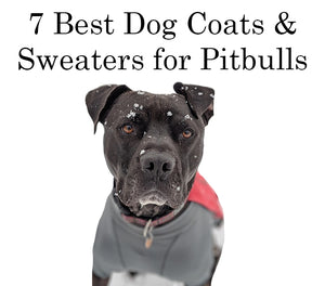 7 Best Dog Coats & Sweaters for Pit Bulls
