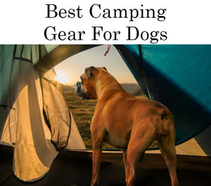 Best Camping Gear For Dogs