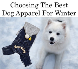 Best Dog Apparel For Winter