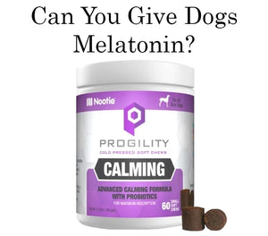 Can You Give Dogs Melatonin? Benefits & Side Effects