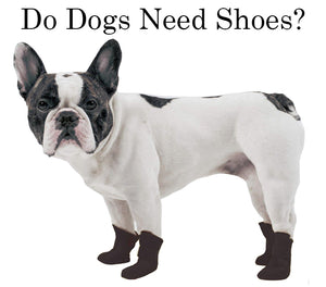 Summer Dog Shoes | Do Dogs Need Shoes?
