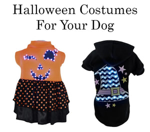 Halloween Costumes For Your Dog