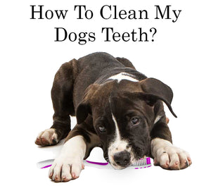 How To Clean My Dogs Teeth