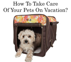 How To Take Care Of Your Pets On Vacation?