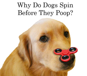 Why Do Dogs Spin Before They Poop?