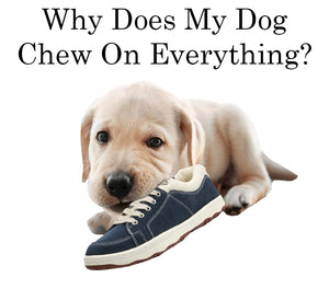 Why Does My Dog Chew On Everything, And What Can I Do?