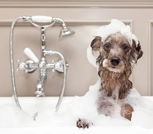 Why It's Important to Bathe Your Dog