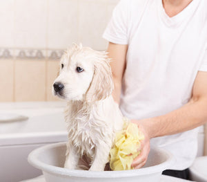 Practice Proper Hygiene for A Healthy, Happy Dog