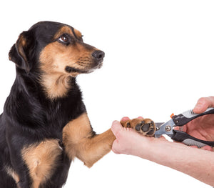 Why are Pet Nail Clippers so important?