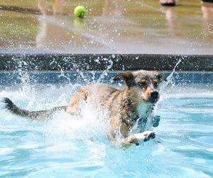 What do dogs love about water?
