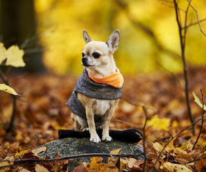 What type of Dog Coats are good for the Fall and Spring?