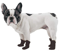 French Bull Dog Wearing Shoes
